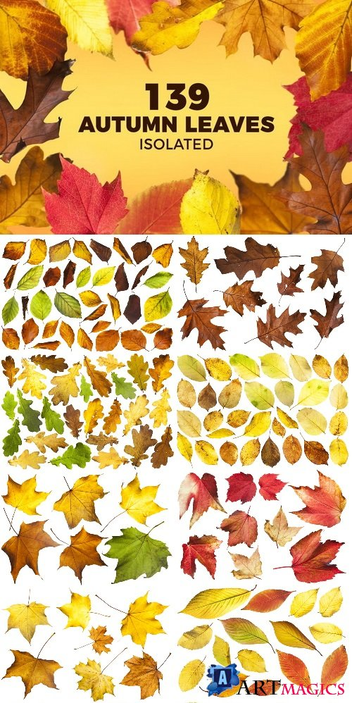 139 Isolated Autumn Leaves