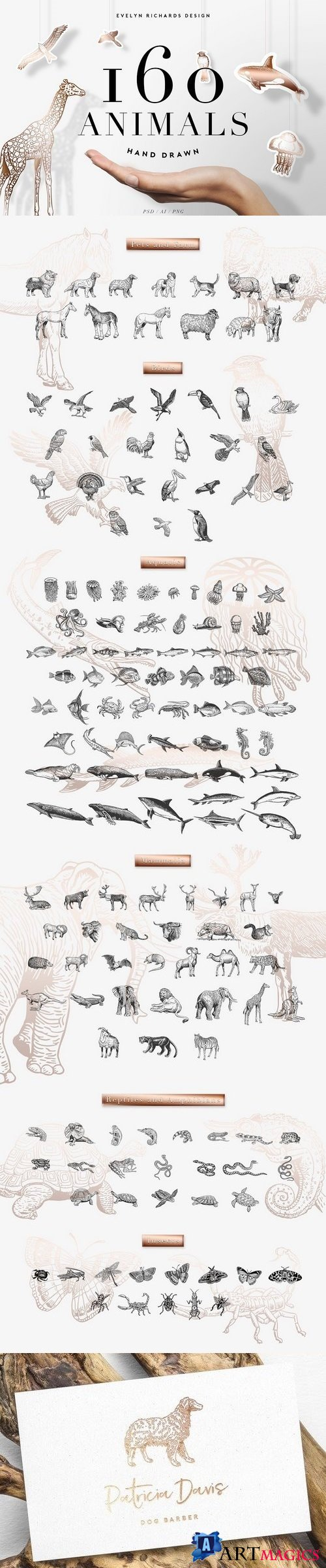 160 Animals - Hand Drawn - 1812147
