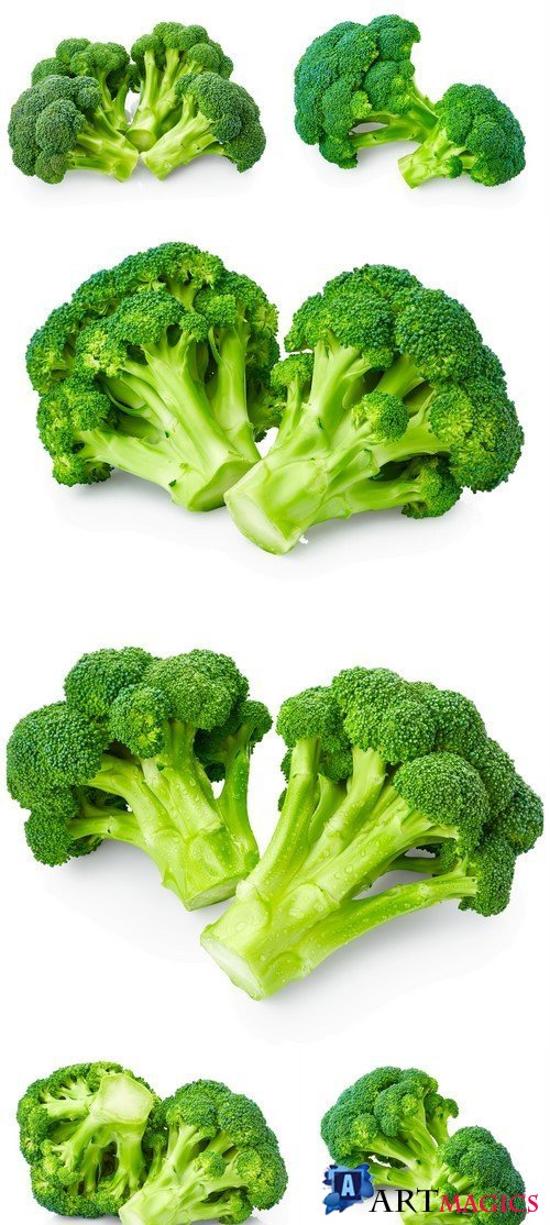 Fresh broccoli 6X JPEG