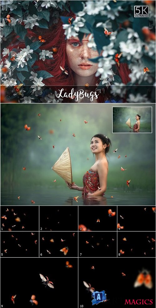 5K Ladybugs Overlays 2057058