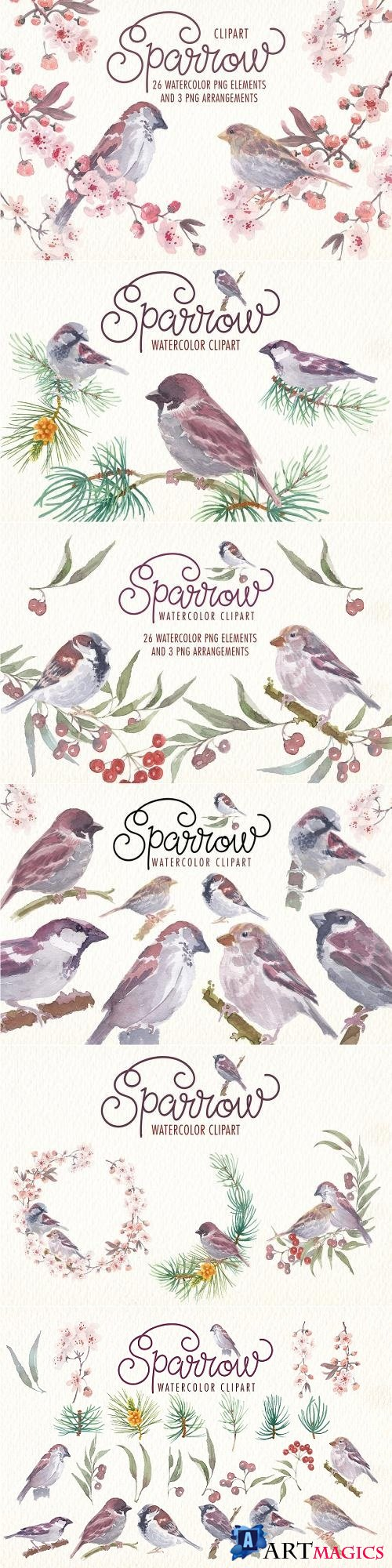 Sparrow Bird Watercolor Clipart - 2248520