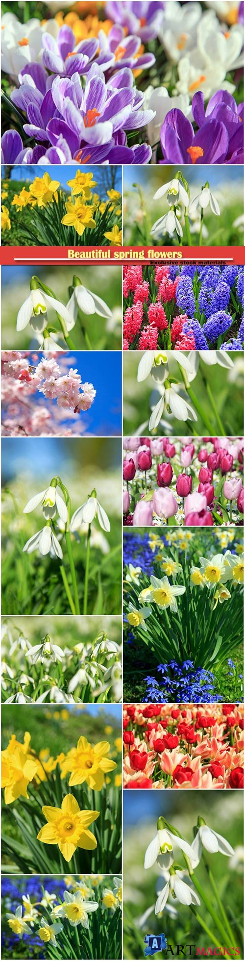 Beautiful spring flowers, snowdrops, daffodils, hyacinths, crocuses