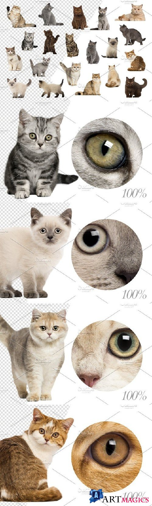 20 British Shorthairs - Cut-out Pics 2293260