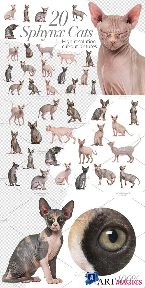 20 Sphynx Cats - Cut-out Pictures 2297171