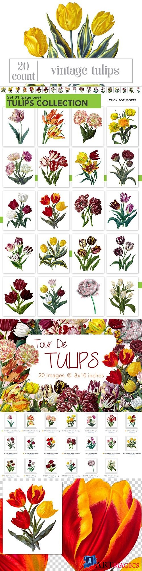 Watercolor Flowers: Tulips Set 01 1547604
