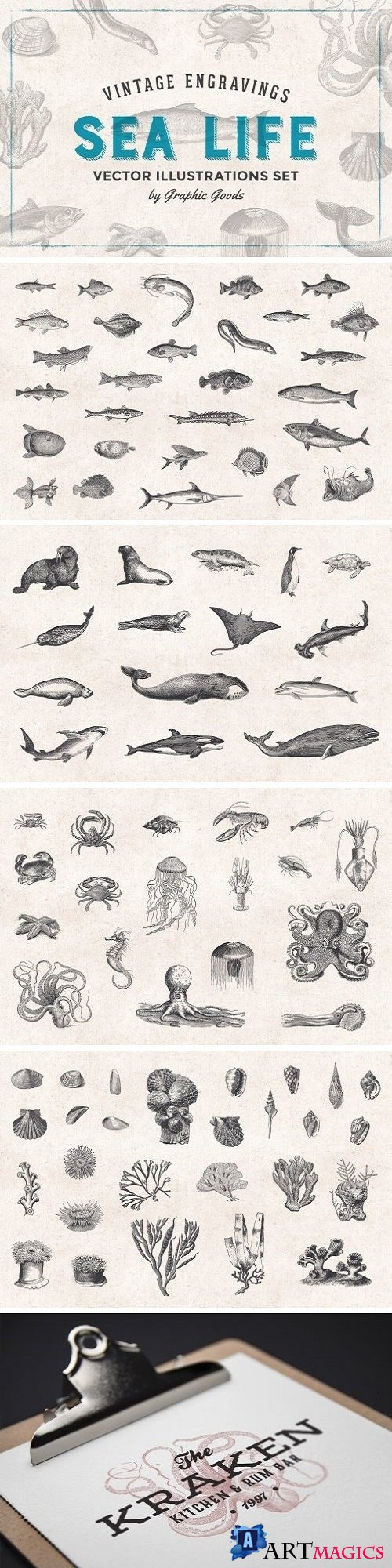 Fishes & Sea Life Engravings Set - 1192599
