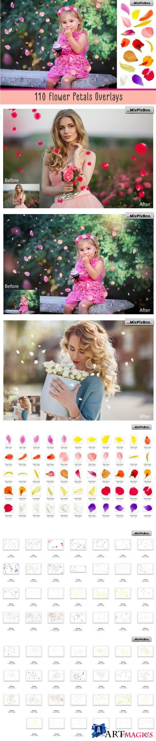 Flower Petals Photo Overlays - 3399998