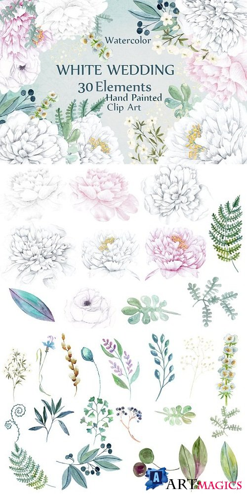 Watercolor white Peonies clipart - 700304