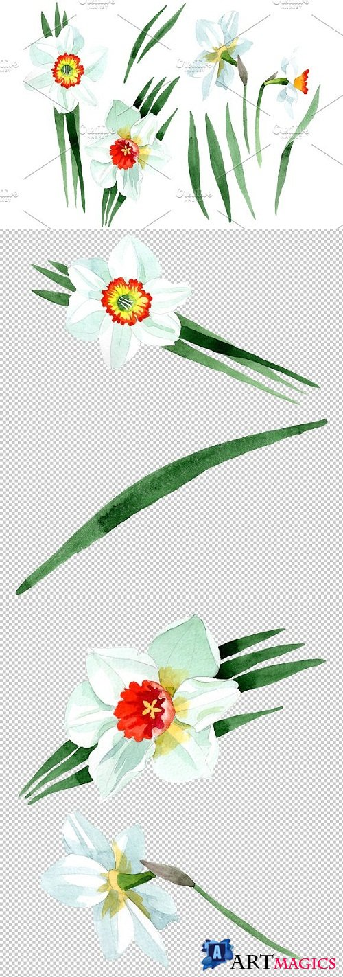 White narcissus Watercolor png - 3484024