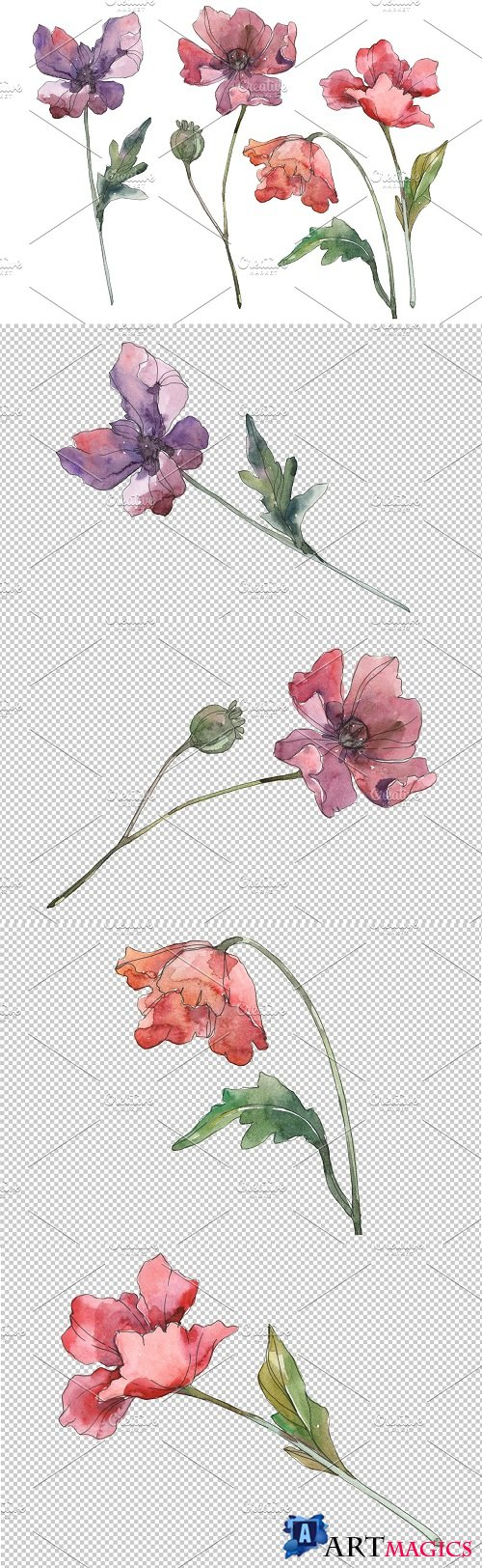 Poppy Watercolor png - 3584629