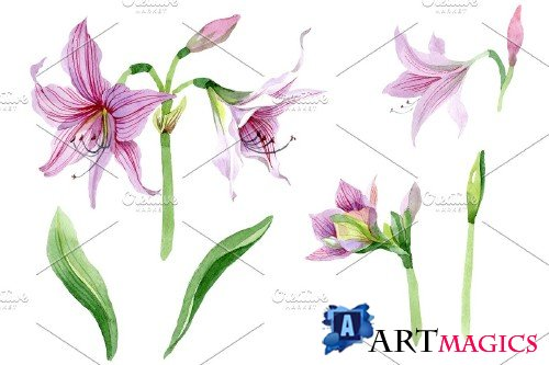 Purple amaryllis PNG watercolor - 3050562