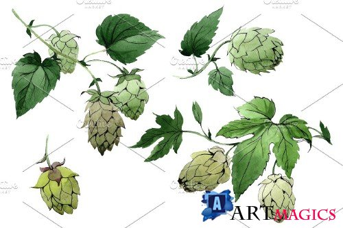 Green watercolor hops png set - 3079104