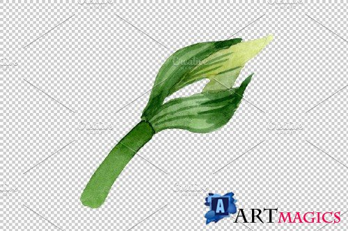 Amarilis watercolor png - 3823726