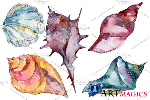 Sea shells watercolor png - 3819590