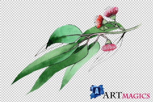 Eucalyptus branch PNG watercolor set - 3095313