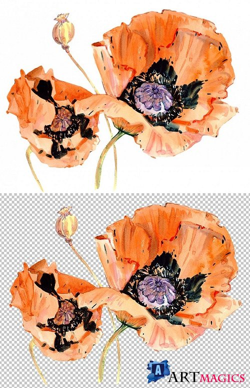 Original poppy red watercolor png 292021