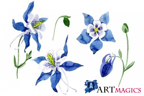 Aquilegia Colombian watercolor png - 295656