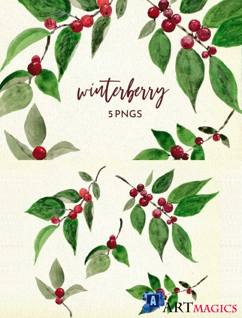 Winter Berry Watercolor