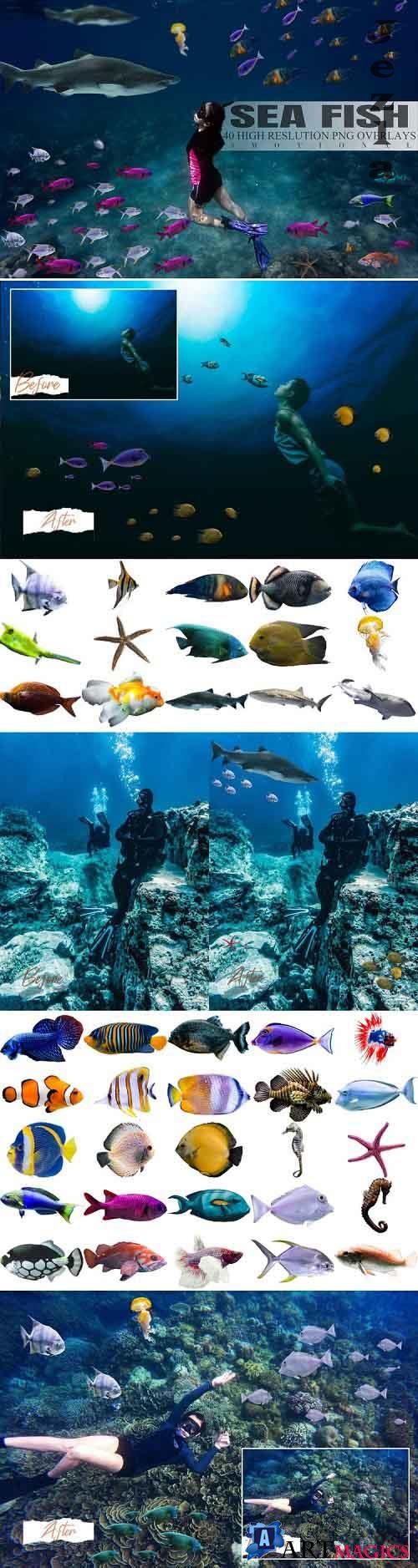 40 Sea Fish Overlays - 819509