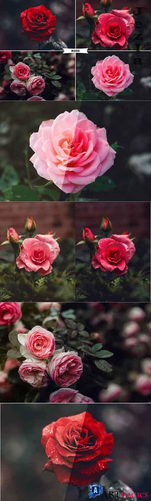 Rose Photoshop Action 4974092